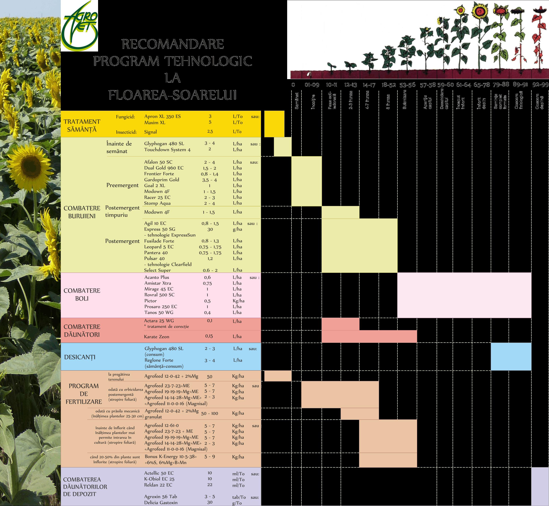 Program tehn Floarea soarelui